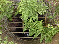 Fern-Covered Well, Water Engineers, Water Filtration in Ipswich, Suffolk